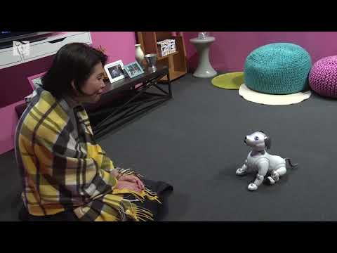 Sony offer robocop dog at home