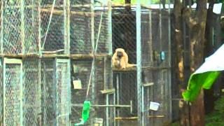 Monkeys Swinging About