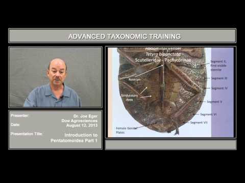 Introduction to Pentatomoidea – part 1