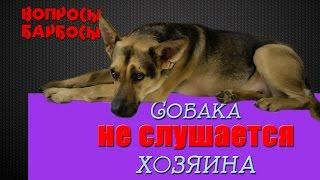 Собака не Слушается - что делать?  2 эффективных способа решить проблему