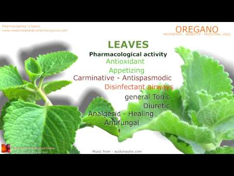 Video Oregano health benefits. Oregano plant medicinal properties.
