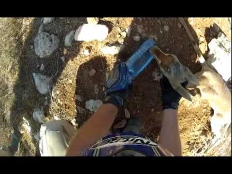 חבורה ישראלית מצילה צבי בשטח