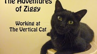 The Vertical Cat - Catify your home - Ziggy Sands 760