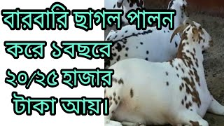 barbari goat farming in bangladesh - TH-Clip