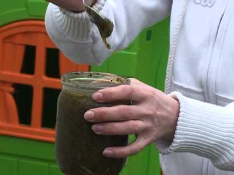 Какой врач лечит глисты в организме человека