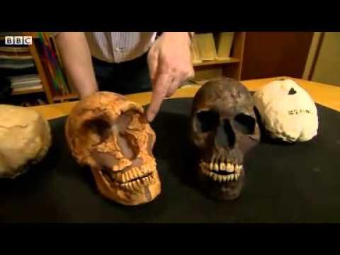 Neanderthals large eyes caused their demise