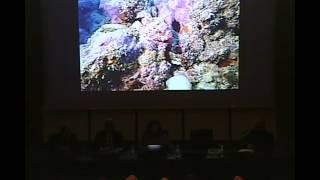 I relitti del Golfo di Venezia. Da pericoli per la pesca a giacimenti culturali