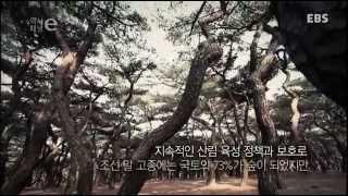 한국의 솔