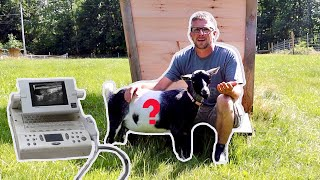 Is Hope Pregnant?!? Goat UltraSound (Emotional) & Starting the SonoTubes for the Next Project