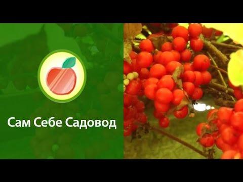 Крем молот тора купить в украине в аптеке