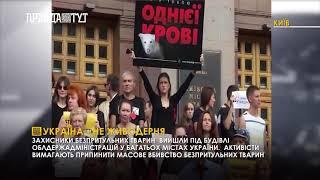 Захисники безпритульних тварин провели всеукраїнську акцію 8af8805045b13