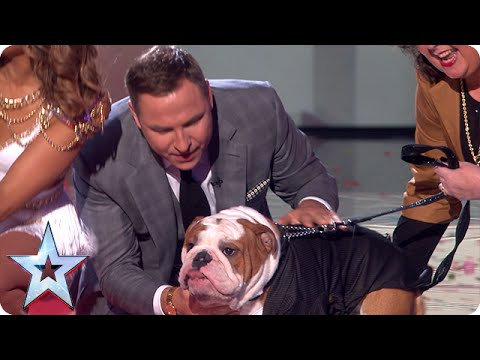 The Judges Meet Their Dog-a-likes | Semi-Final 3 | Britain's Got Talent 2015
