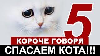 SHORT TALKING l WE SAVE CAT # 5 [First-person] HOMELESS KITTEN