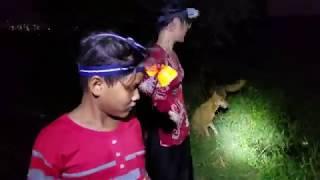 Mồi Cắm Cá Lóc Nhạy Nhất 10 con nộp mạng l Cắm câu đêm ở Sài Gòn