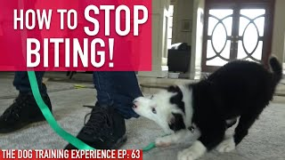 How one can Prepare Your Pet to STOP BITING, Watch How Lengthy it Really Takes!