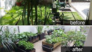 MY EDIBLE GARDEN | Garden Tour | Small Garden | Malaysia
