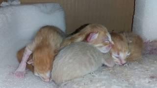 Офисные котята
