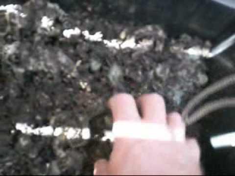 Isang taong nabubuhay sa kalinga ng pamumula kaliskis
