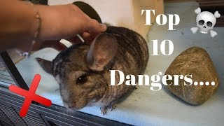 Top 10 Dangers To Chinchillas