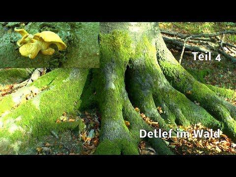 Der Wald Detlef auf Entdeckung Teil 4 im Buchenwald