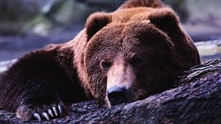 "Фильм ""Медведь"" (Аюу) Bear"