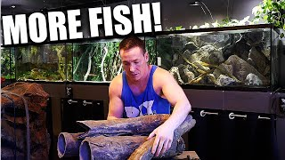 FISH ARE COMING!! Aquarium filters and set up  - The king of DIY