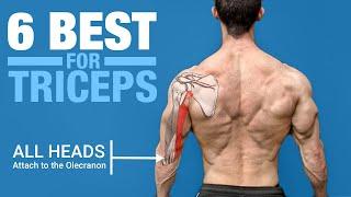 6 BEST Triceps Exercises (ANATOMY BASED)