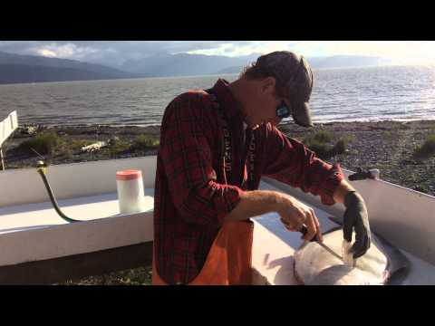 Pesca di un moygota