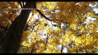 紅葉の動画素材・4K写真素材