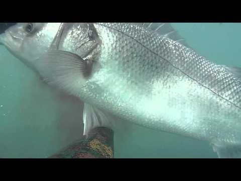 Pesca invernale di Yuryevets di video