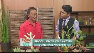 Diamond Head Plants: What is the difference between succulents and cactus?