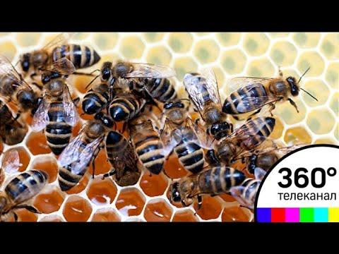 На ВДНХ открылся музей пчеловодства
