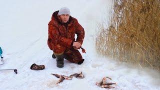 Ловля окуня зимой в камышах