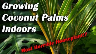 Growing Coconut Palms Indoors