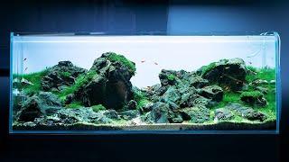 Akwarium w stylu Iwagumi - inspiracja