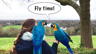 Mikey And Mia Visit Richmond (Parrot Free Flight) || Mikey The Macaw
