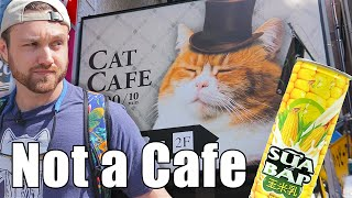 William Visits A Japanese Cafe