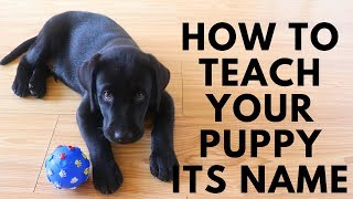 How to Teach my Puppy its Name? - Dog Name Recognition Training