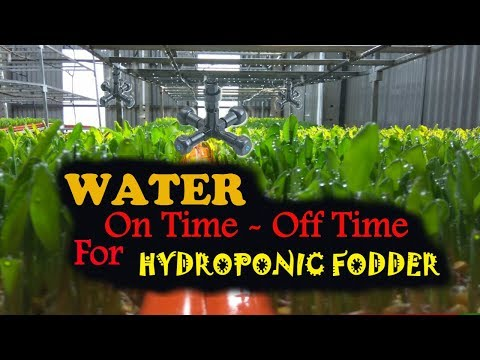 Ashwin Sawant | How Much You Should WATER ( On Time / Off Time ) your Hydroponic Fodder
