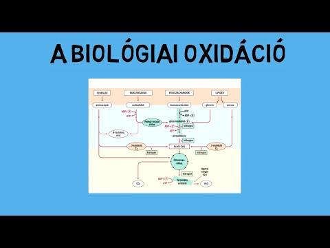 Tisztítás szervezetekből és parazitákból video