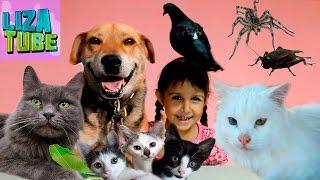 КОТЯТА и другие питомцы Лизы коты, кошки, собака, голубка, пауки и сверчки