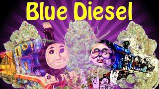 BLUE DIESEL // STRAIN REVIEW // SRGT GREENLEAF #CRTV420