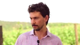castelvecchio:produrre vino del carso