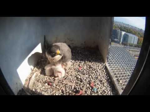 Nest 2: Sun in Nest - 19.04.17