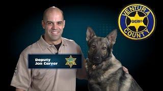 A Happy Police Dog (45 Sec)