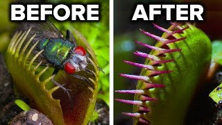 Facts About Carnivorous Plants - Video Youtube