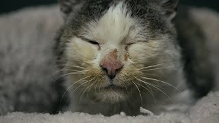 Starving Old Cat Gets a Home And a Warm Bed