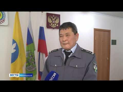 В Республике Калмыкия Управлением Россельхознадзора выявлен факт перевозки крупной партии пшеницы без карантинного сертификата