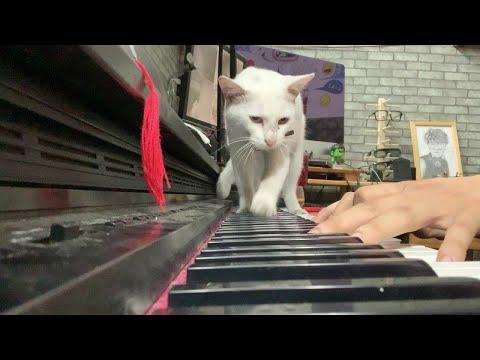 Serenade für die Katze
