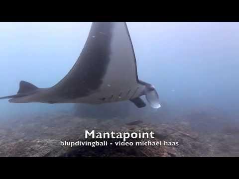 Mantas am Mantapoint Bali